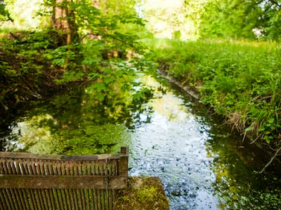 small creek in the park